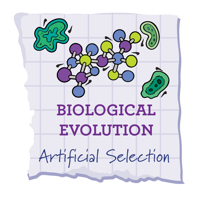 Artificial selection soar through stem artificial selection ccuart Image collections